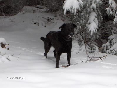 Jurre in de sneeuw
